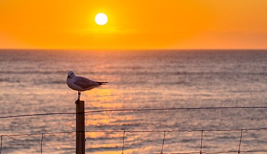 sunset beach by Colin Sherman