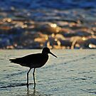 Shorebird in the Morning by Robin Black