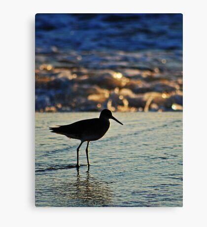 Shorebird in the Morning Canvas Print