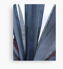 Blue Agave - Agave azul Canvas Print