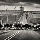 Cattle Crossing by Michael  Dreese