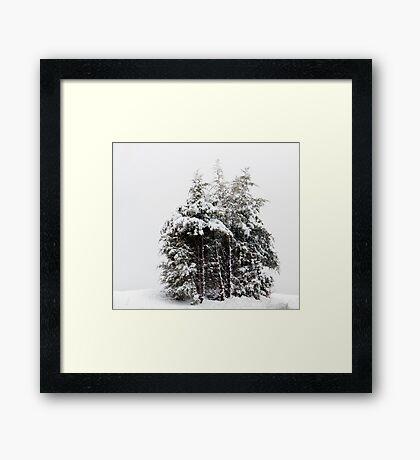 Wintry Cedars Framed Print
