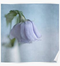 Lisianthus Poster
