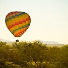 Hot Air Balloon In the Lush Arizona Desert With Saguaro Cactus by Bo Insogna