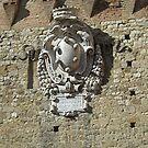 Shield, Pisa by Barbara Wyeth