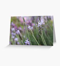 Blue Lavender  Greeting Card