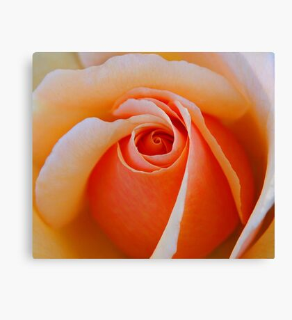 A Rose For My Friends Canvas Print