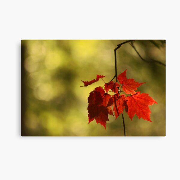 Autumn treasures Canvas Print