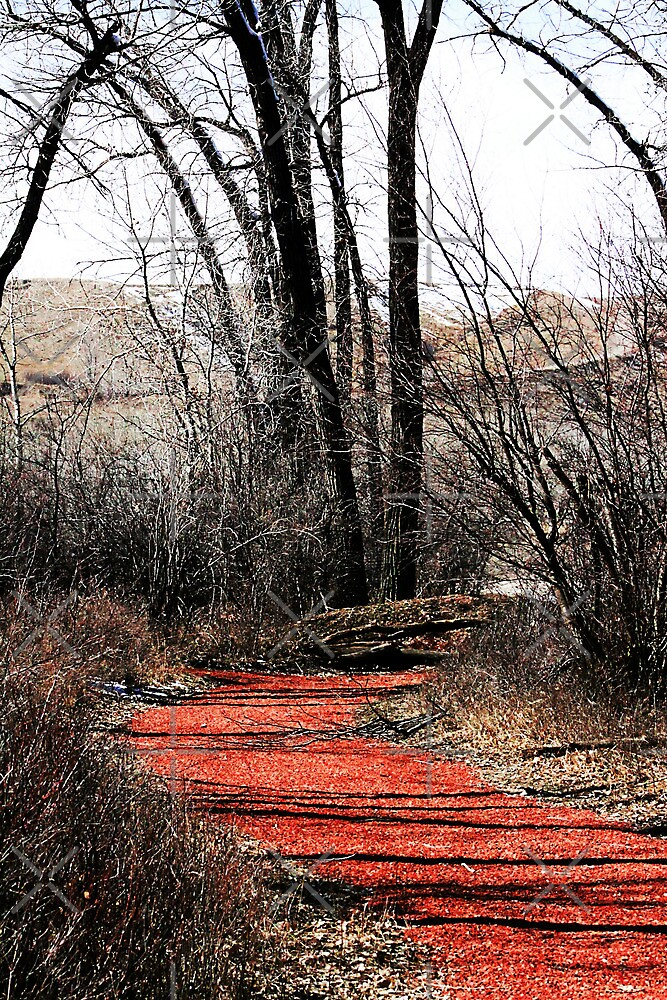 Follow the Red Brick Road by Alyce Taylor