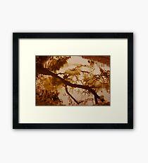 A Walk in the Rain Framed Print