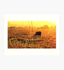 Croome Cow Sunset Art Print