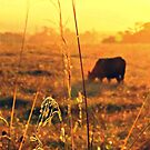 Croome Cow Sunset by Masterclass