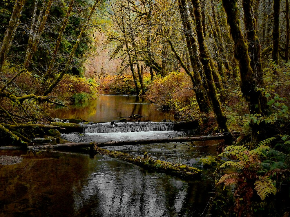 Whittaker Creek by Charles & Patricia   Harkins ~ Picture Oregon