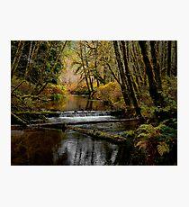 Whittaker Creek Photographic Print