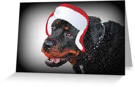 Santa Samson by Ladymoose