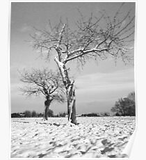 Old Cherry Orchard in Winter Poster