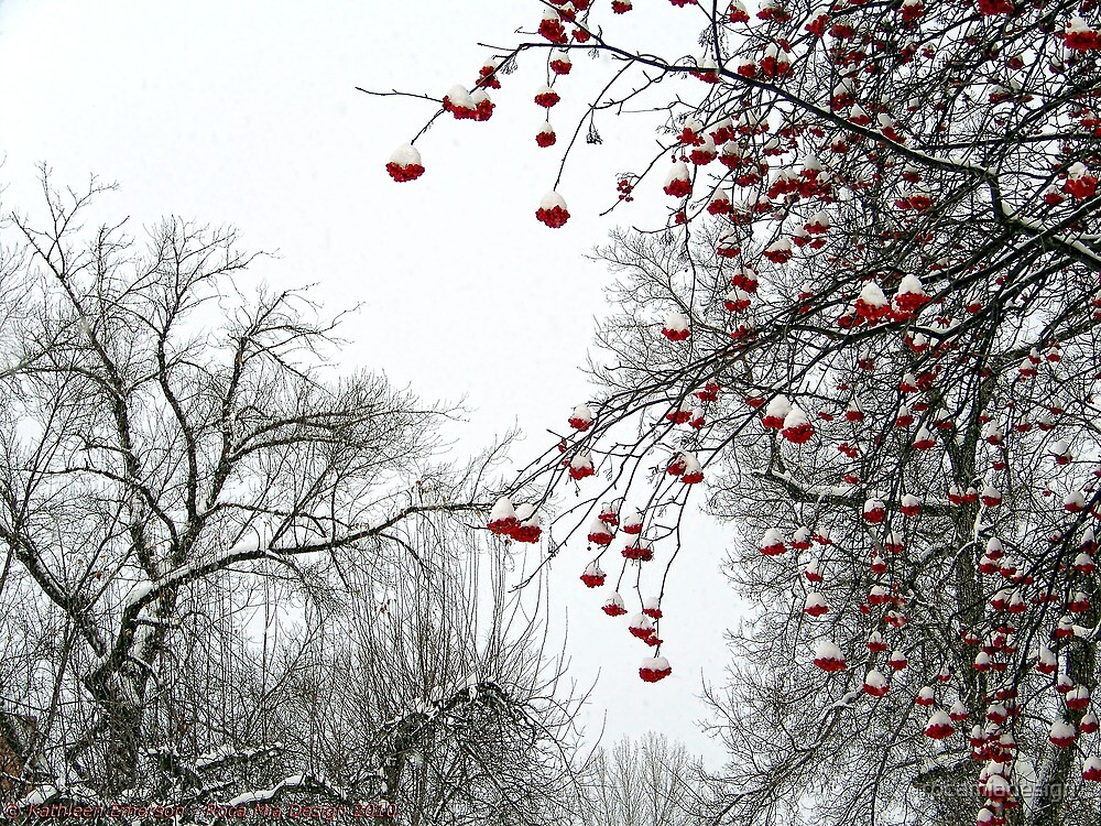 Winter Berries by rocamiadesign