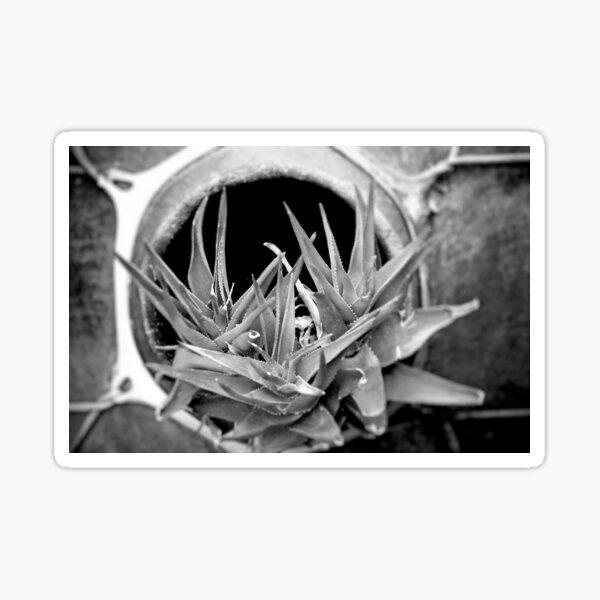 Cactus in Black & White Sticker