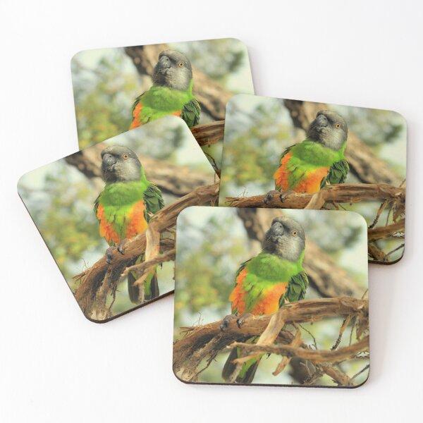 Parrot on Potosi Coasters (Set of 4)