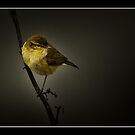 Willow Webler by RAY AGIUS