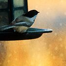 Chickadee at the Feeder, digital art by Donna Ridgway