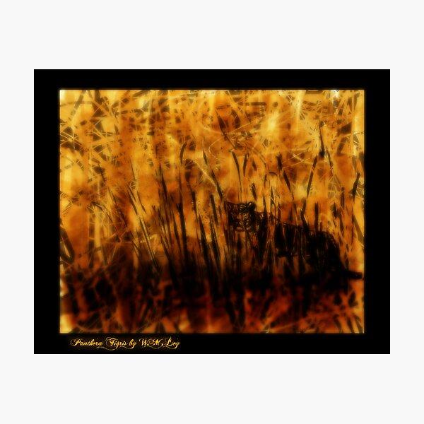 Panthera Tigris, essence Photographic Print