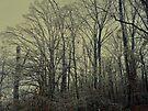 Icy Trees by FrankieCat