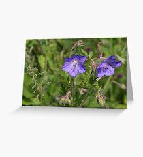Soft blue Crane´s bill Greeting Card