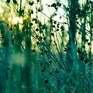 twilight by tangleduptight