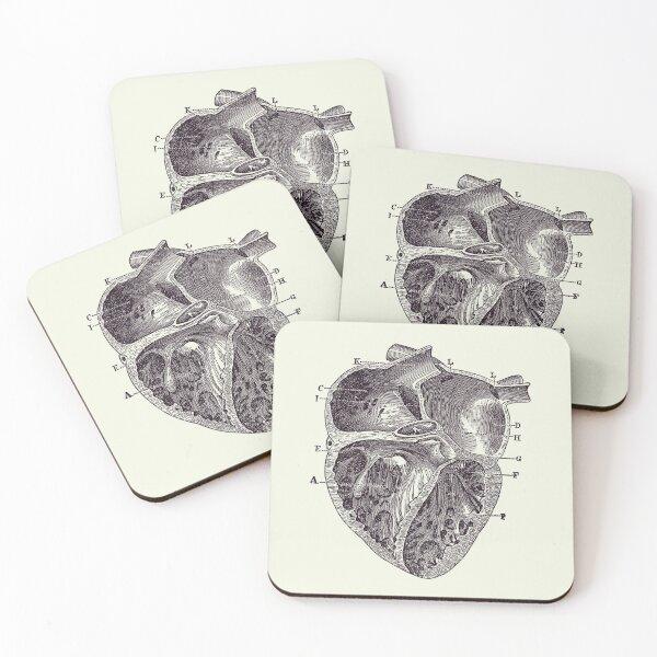 Inner Heart Diagram - Vintage Anatomy 2 Coasters (Set of 4)