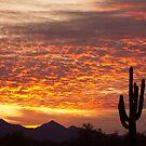 Arizona November Sunrise With Saguaro   by Bo Insogna