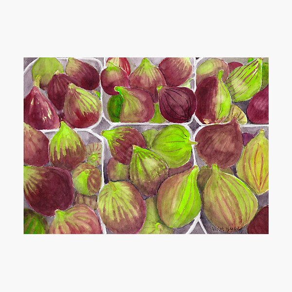 Jerusalem Figs - Realistic Watercolor Photographic Print