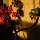 Antique Geranium by mikequigley