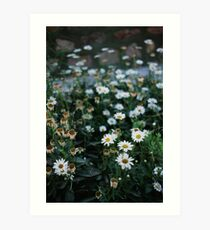 Daisies patch Art Print