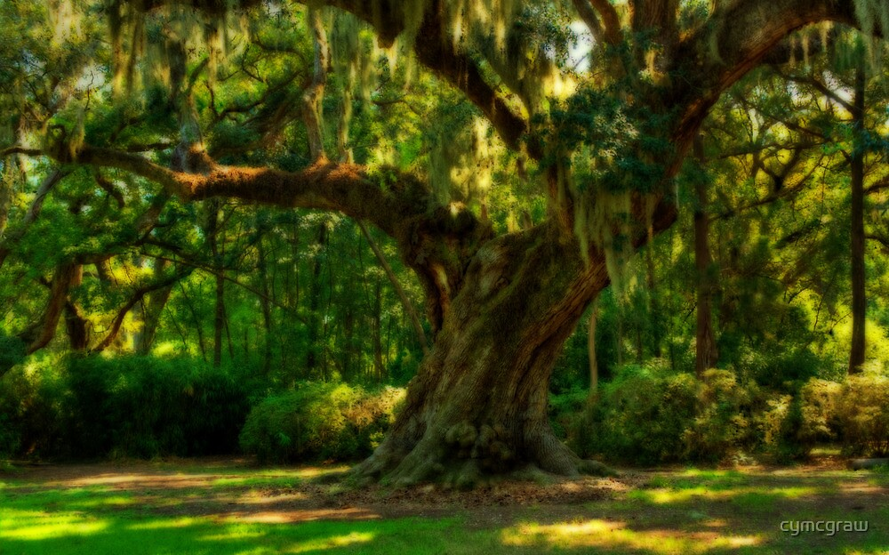 Big and Old by Cynthia Broomfield