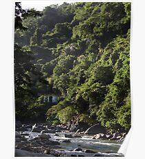 River Cuale with jungle - Rio Cuale con selva Poster