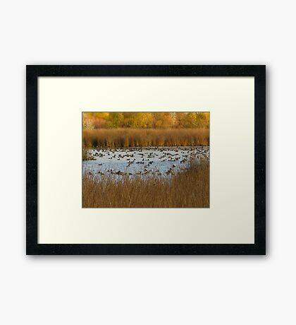 Nature's natural Beauty Framed Print