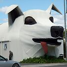 A Mad Dog House by dgscotland