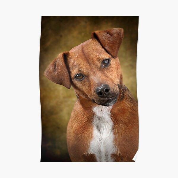 Patterdale Terrier Hund Brosche Anstecker Schal Fastener Schwarz Mit Gift Tasche