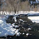 Little Big Wood River, Ketchum, Idaho; USA by Brenda Dahl