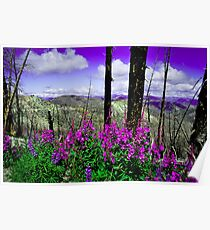 Forest Fires & Wildflowers Poster