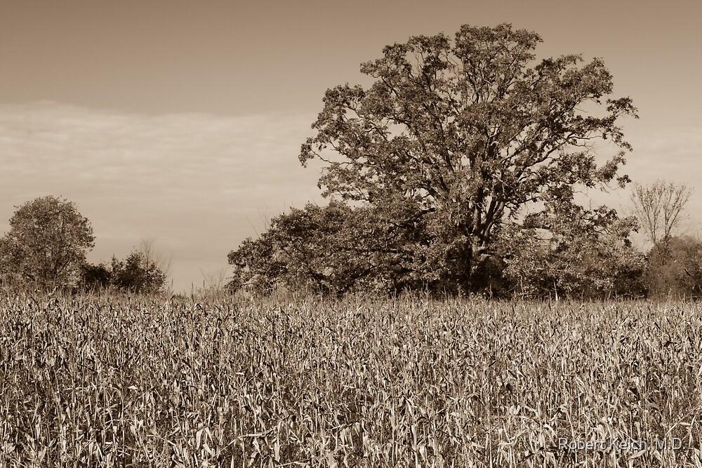Guarding The Corn Field by Robert Kelch, M.D.