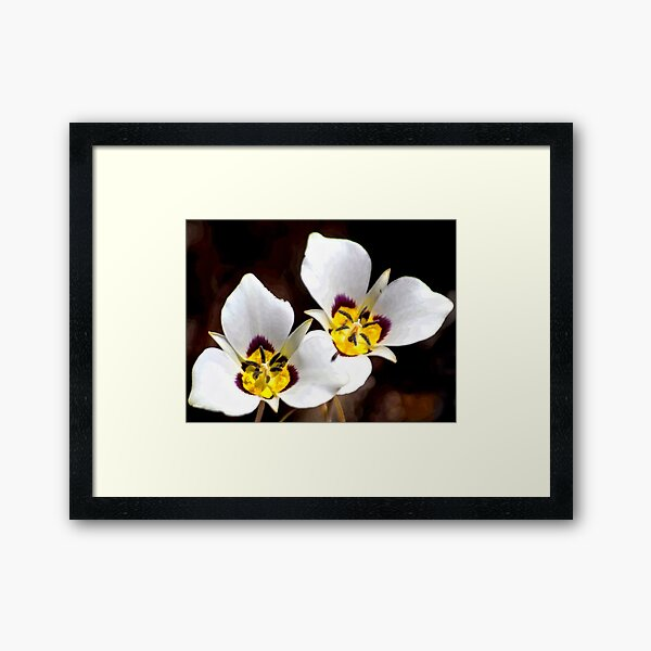 Sego Lily Framed Art Print