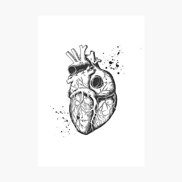 Anatomical Heart • White • Minimalist Goth Photographic Print