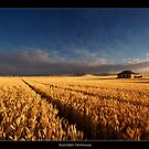 Australian Farmhouse by JayDaley