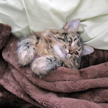 Siberian Snuggles by phillaine