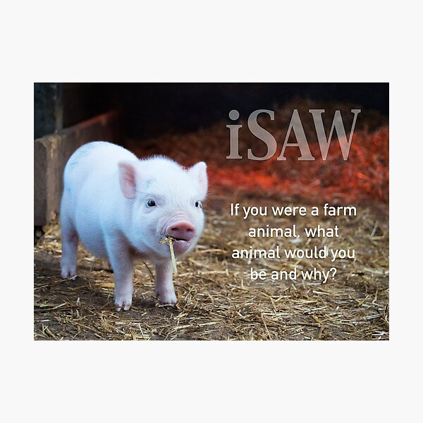 If You Were A Farm Animal Photographic Print