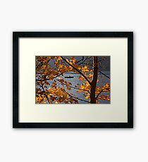 Row row row your boat. Framed Print