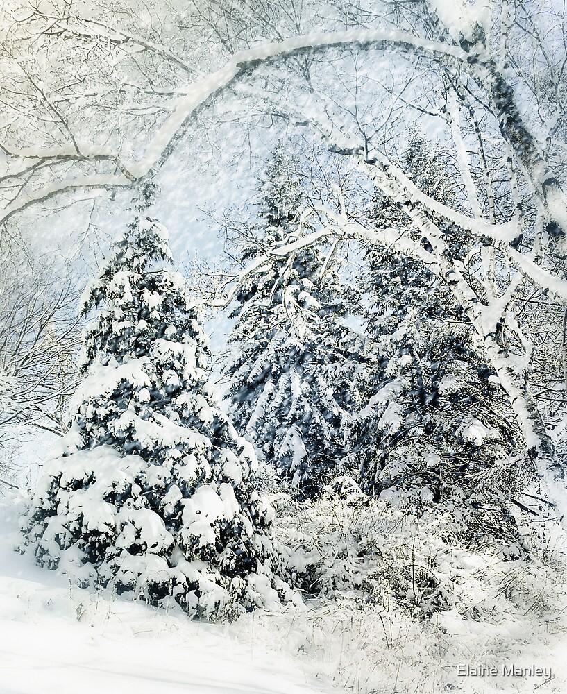 Snow Blanket by Elaine Manley