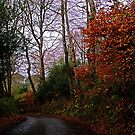 AUTUMN TWIILIGHT by AndyReeve